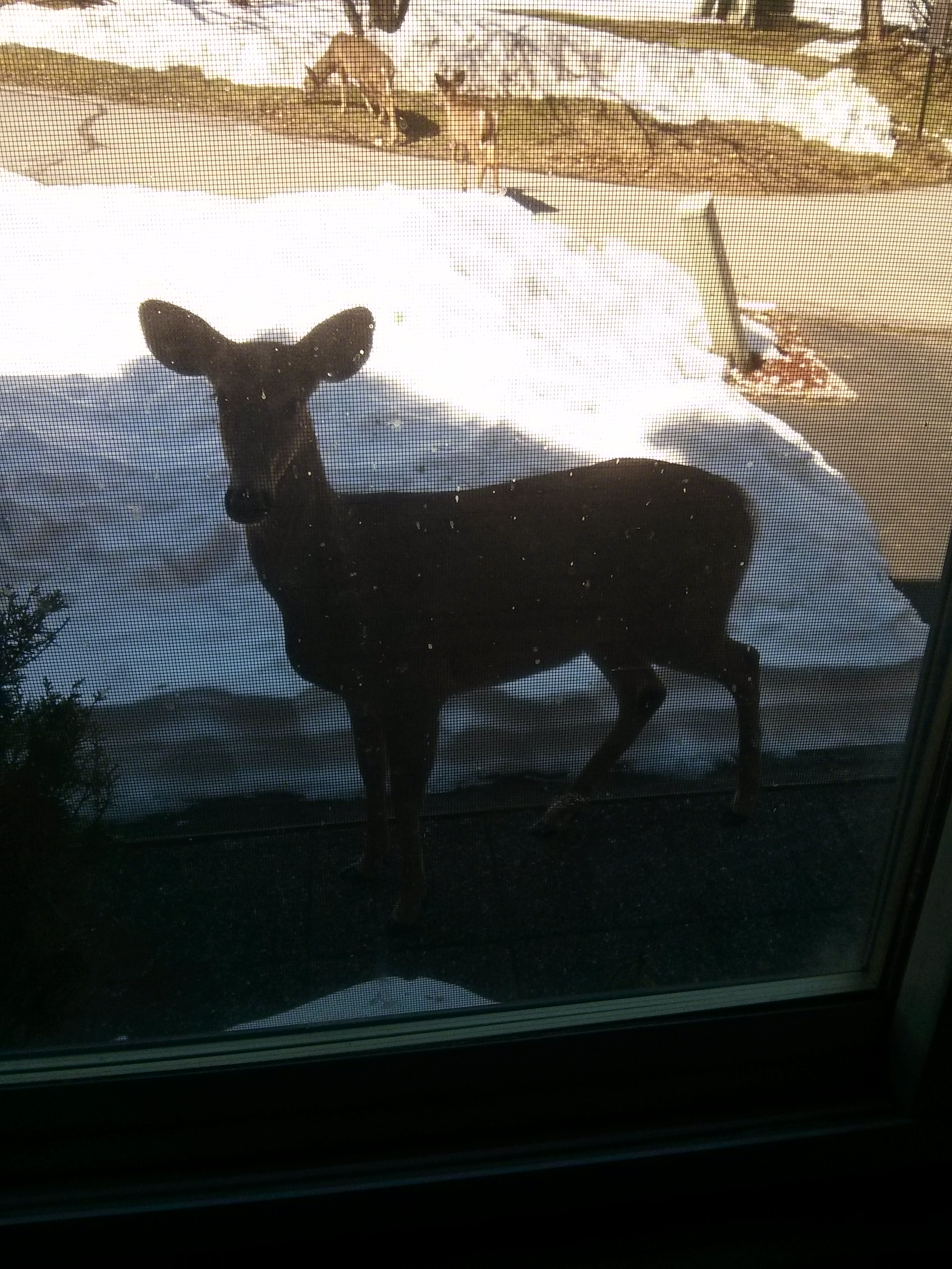 deer in snow seen though the window screen