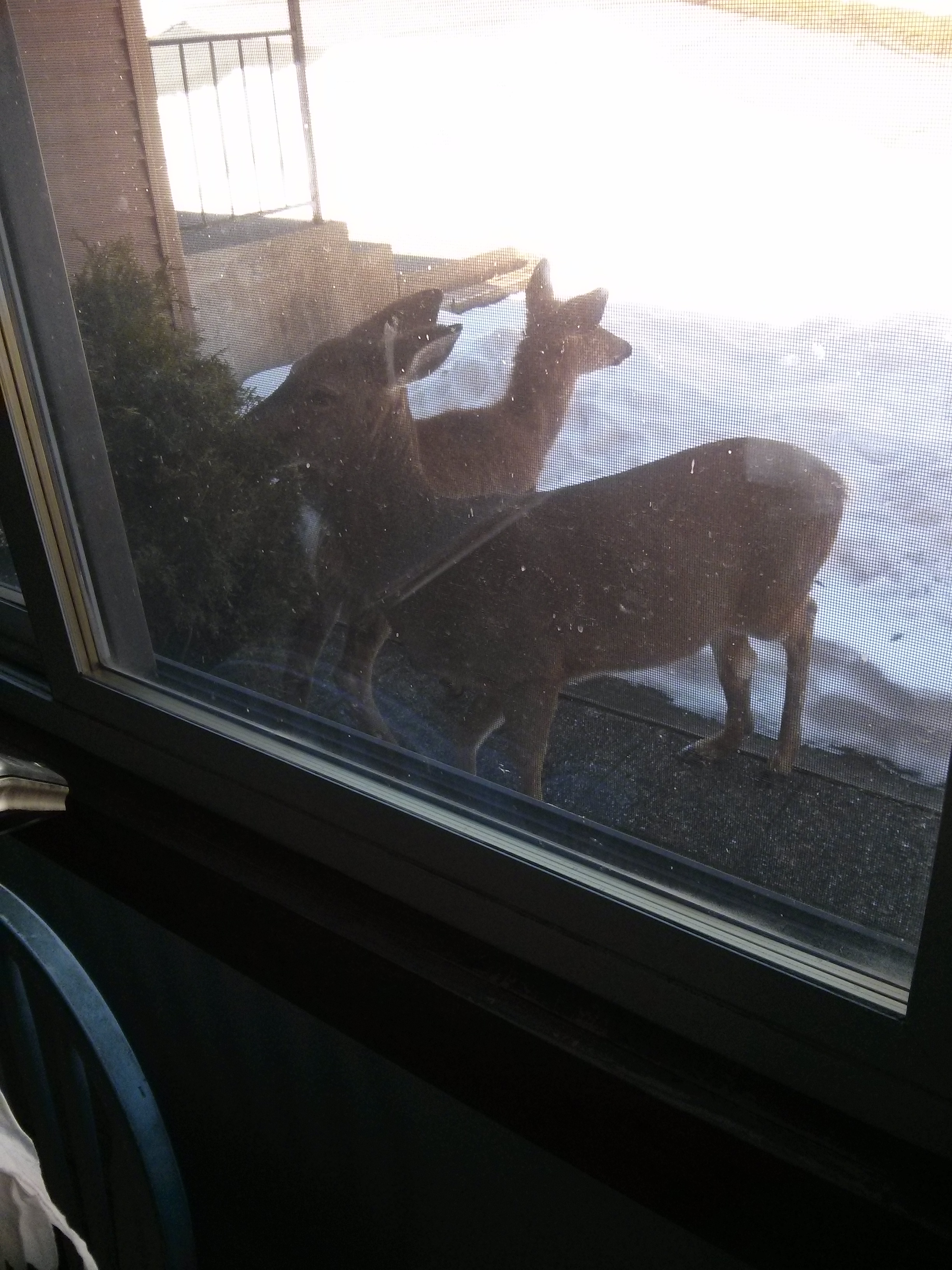 group of deer outside the window