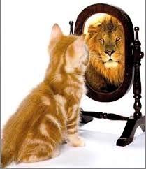 cat seering a lion as a mirrror image